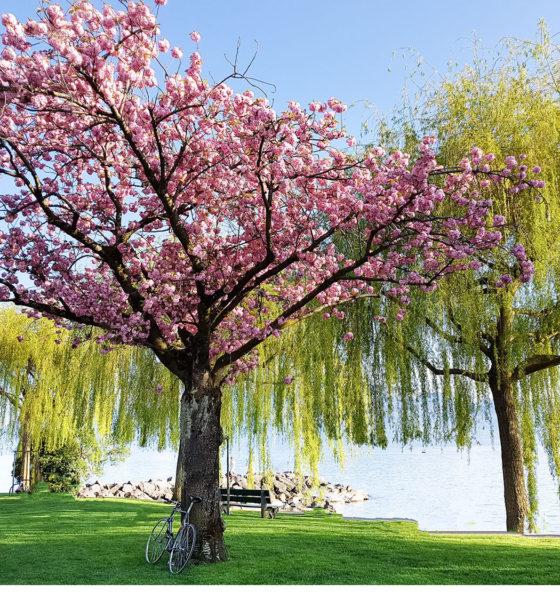 C'est le printemps ♡